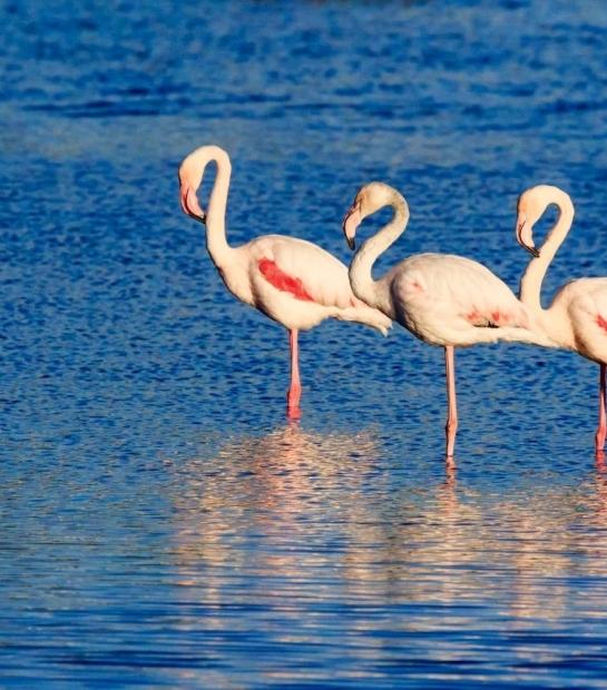 fenicotteri-rosa-pantelleria_(1).jpg