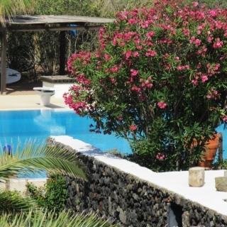 piante-fiori-piscina.jpg